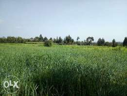 15acres land in timau