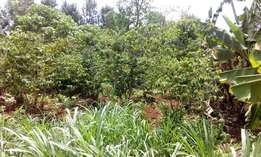 Thindigua 3/4 acre plot
