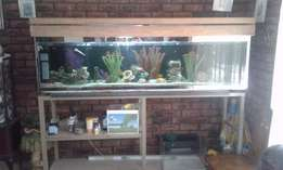 Large fish tank with fish for sale or swop