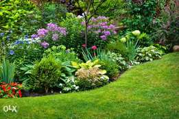 Affordable Landscaping and Maintenance Services