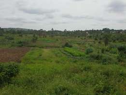 Plot of land 70ft by 40ft in bukerere at 5m
