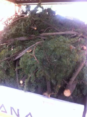Gardening, Landscaping, Site, Bush Clearing and Grass Cutting solution Northwold - image 6