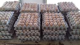 Free Delivery Fertile Broiler hatching eggs