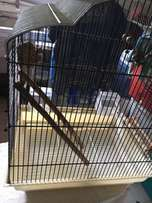 bird cage and toy accessories
