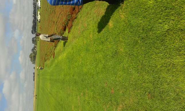 Evergreen instant lawn suppliers Mooikloof - image 2