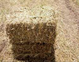 Wheat straw for sale