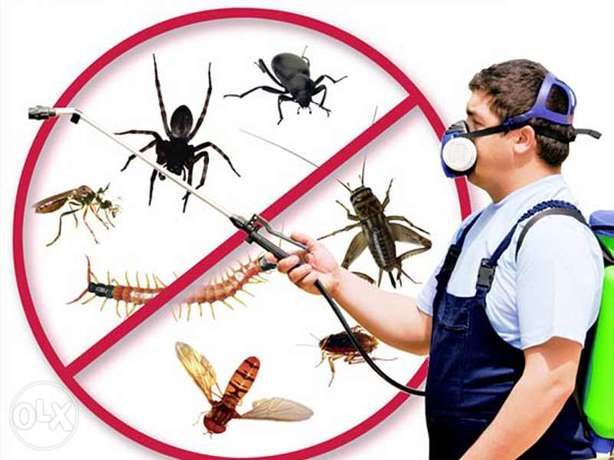 Pest control service available in bahrain