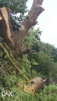 Tree felling in Vereeniging by proffessionals