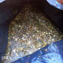Silage for Dairy lactating cows