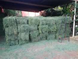 Freshly Cut B-Grade Lucerne Bales for Sale