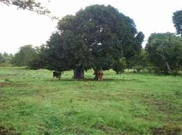 Am selling a farm at ukunda measuring 6.75 acre Land for Sale in Kwale