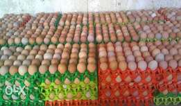 fresh eggs for sales at affordable prices