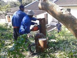 Tree shaping, tree removal, and land clearing services