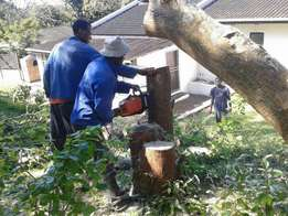 Tree cutting felling .trimming and removal
