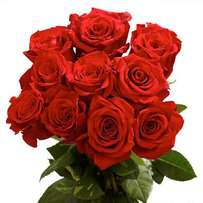 Fresh red roses natural Rose Flower bunch of 10