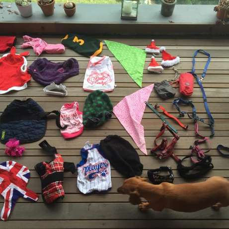 Dog Clothes & Leashes; Small Breed; VERY high Quality & Large Quantity Hout Bay - image 4
