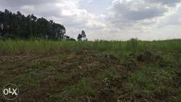 Freehold agricultural land for sale (Mumias)