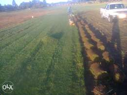 cheap instant lawn,,,Free delivery,free planting