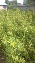 Land for sale at Kutunse