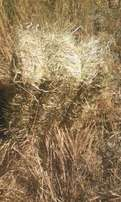 Oat Hay for sale