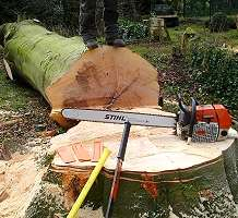 Tree Cutting and Felling - No Job to Big or Small Free quotes‎