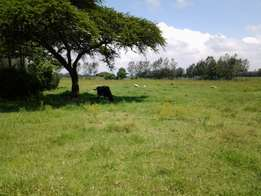 4 Acres for sale in Ngata