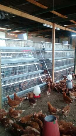 Homestead farm cages.high quality Baba Ndogo - image 2