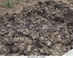 Farmyard Manure Needed - Cow dung, Chicken Droppings, etc.