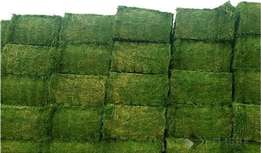 Best Grade A Teff ,Lucerne and Eragrostis Bales Both Square and Round