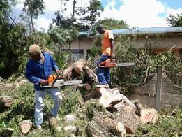 Tree felling and site clearance at affordable price