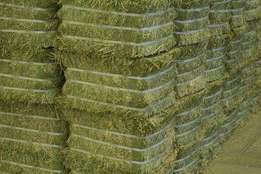 Top Grade Lucerne Hay Bales 25kg Available
