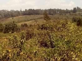 WATTLE RIDGE, 1/8th acre plot in Kikuyu