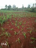 1/2 acre in Ruiru mugutha 3km from Thika Rd ksh 7m