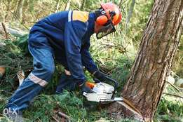FREE tree felling & removal