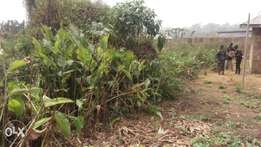 One and half plot of land at command b4 omi adio