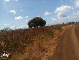 Land for sale,