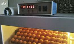 egg hatching services in Kisumu
