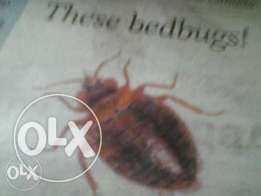 pest control and Fumigation for/ of Bedbugs, Rats,roaches & mosquitoes