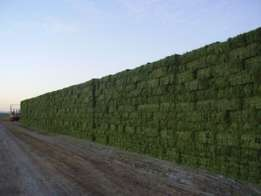 High Protein Lucerne Hay in South Africa
