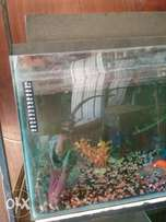 4 Fishtanks with accessories and Fish all Owner moving Natal