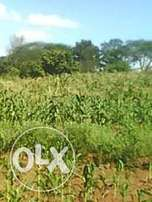3.4 acre land for sale in Yatta, Machakos county. Kshs 1.5m per Acre
