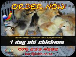 1 Day Old Chickens for SALE