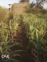 selling 40 by 60 plot at nyacaba, witeithie, 300,000