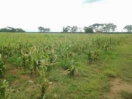 20 Acres for sale in Nakuru / San Marco Settlement Scheme, Rongai