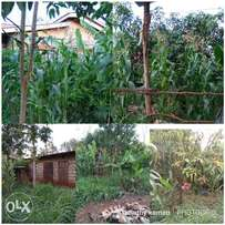 150*50 plot for sale at Kenol, Muranga county. With a few single rooms