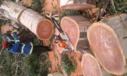 Hm Tree felling
