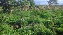 Karangaita 1/4 acre plot for Sale
