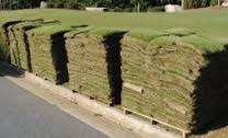 Instant lawn Supplies