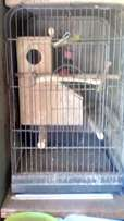 Parrot cage R800