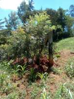 Prime half acre of land for sale in Nyeri